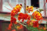 Цветы во внутреннем дворе