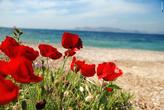 Все пригорки у моря заросли цветами.