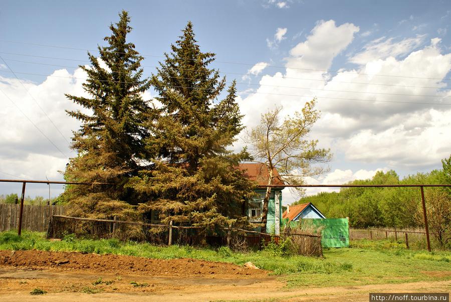 А вот наш дом. Единственный дом на всей улице, где в палисаднике растут шикарные голубые ели.