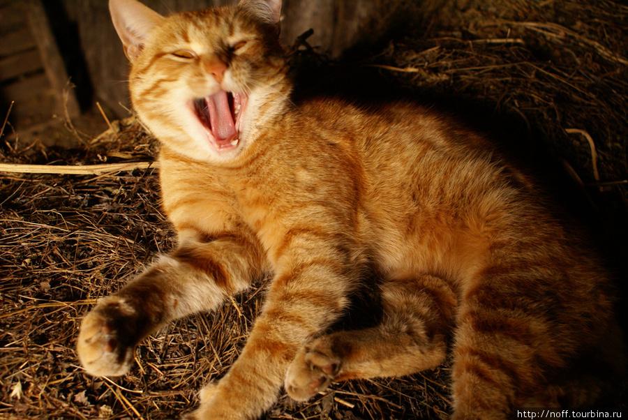 Сейчас живёт лишь семейная пара кошек. Вот глава семейства по имени Афоня.