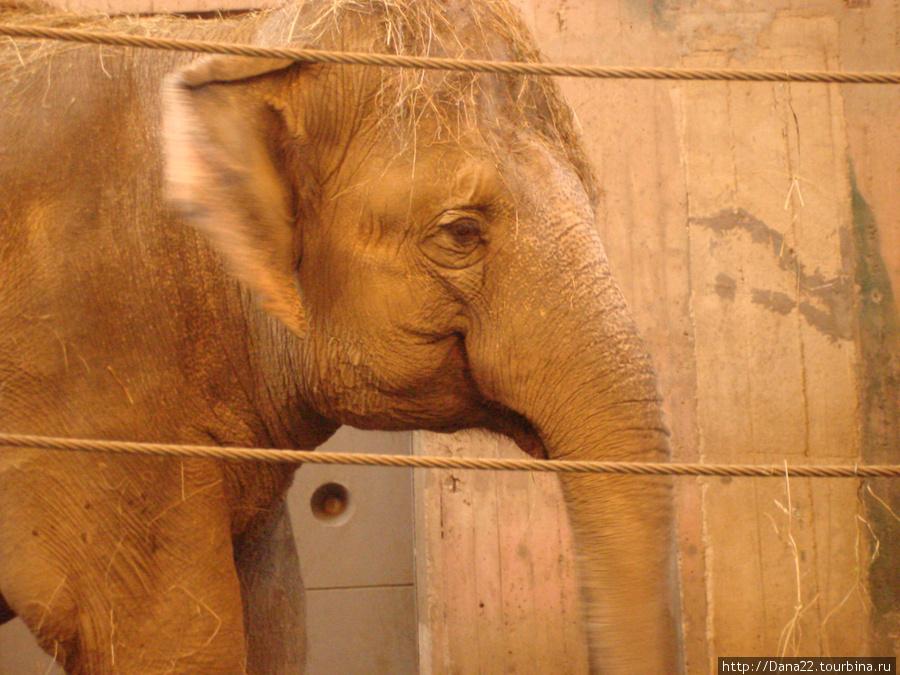 Этот слонёныш напомнил мне мамонтёнка из мульта, который маму искал :)