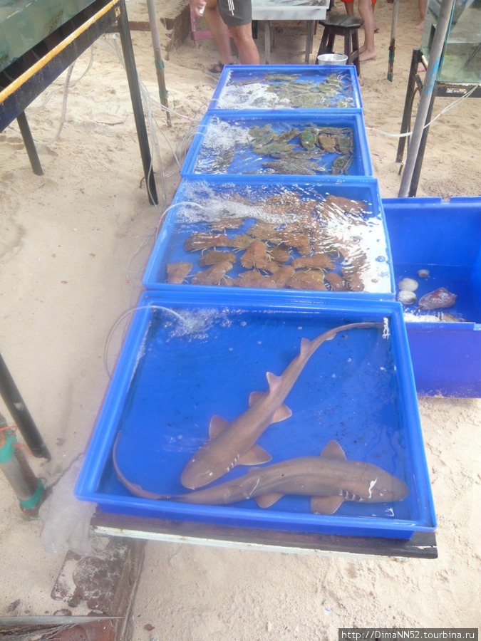 Акулу могут приготовить в кафе на острове. 1200 бат.