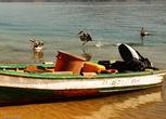 Ситуация сразу меняется — пеликаны на перегонки устремляются к добытчикам, сейчас за борт посыпятся потроха и неликвидные рыбины!