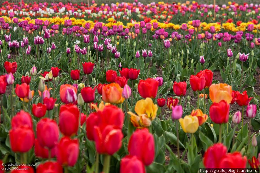 поражает многообразие! тут есть какие хочешь, и даже те, которых не встретишь в цветочных магазинах