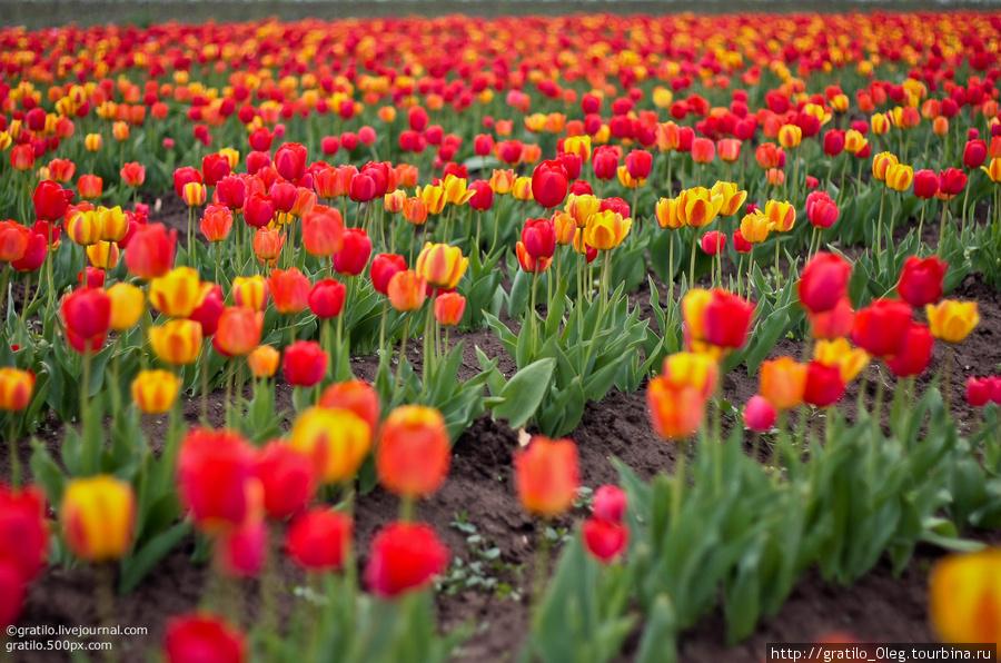 цветов так много, что начинает рябить в глазах!