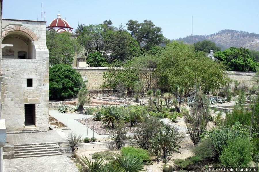 Кактусы во внутреннем дворе доминиканского монастыря Оахака, Мексика