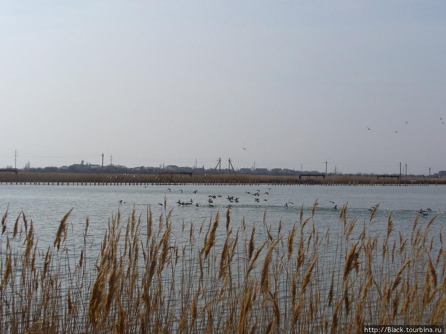 Утки в соленом озере