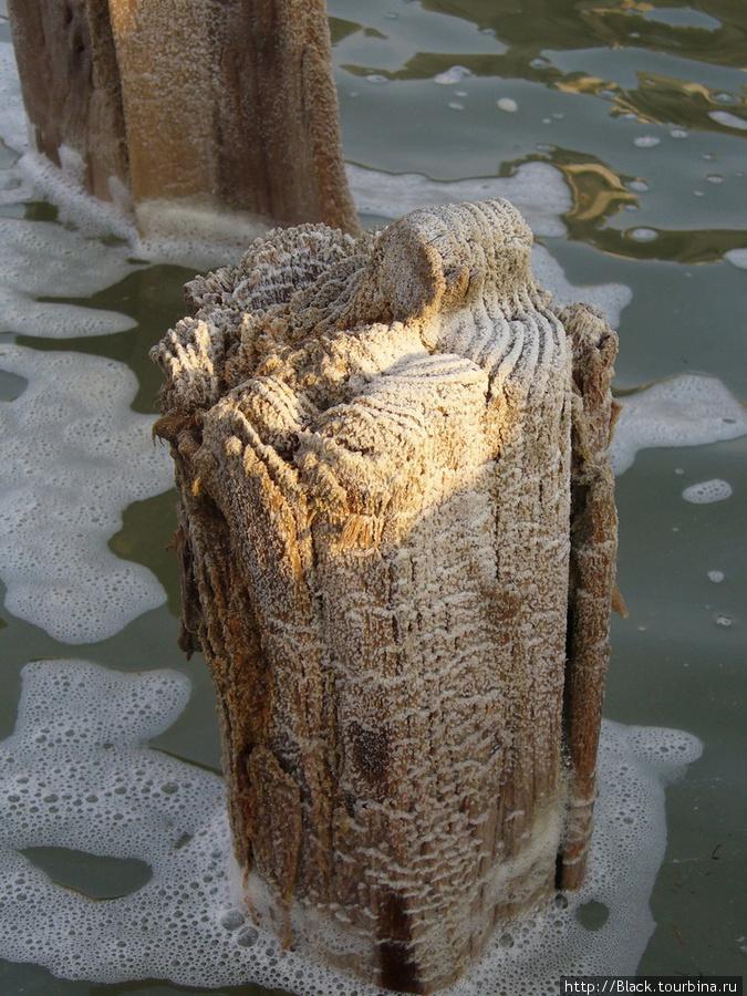 Соль на дереве