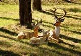 На площади перед храмом множество фигурок животных, на радость детям... Вот такая оленья семейка, например: