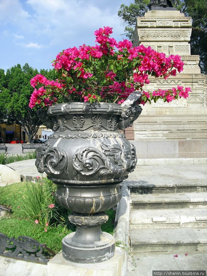 Ваза с цветами Оахака, Мексика