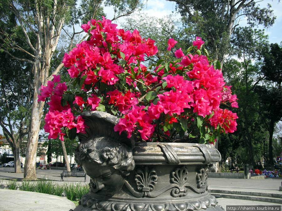 Цветы в вазе Оахака, Мексика