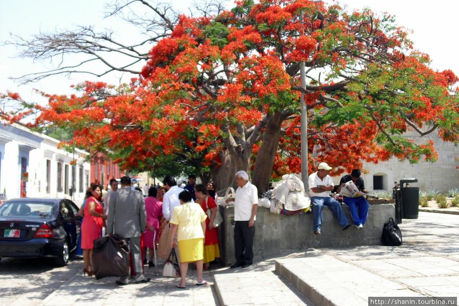 Тусовка под деревом Оахака, Мексика