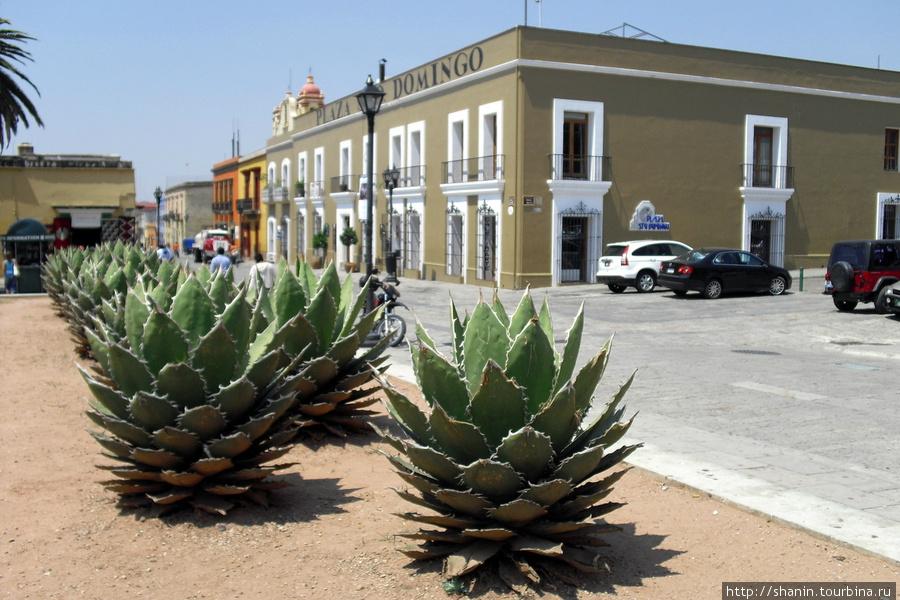 Кактусы на площади Оахака, Мексика