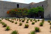 Кактусы у стены доминиканского монастыря