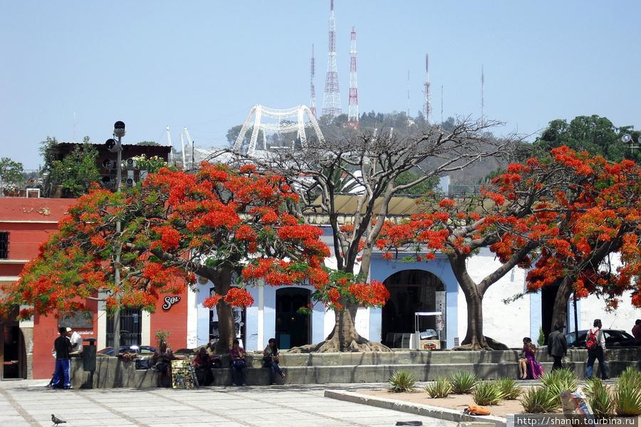 На площади перед доминиканским монастырем Оахака, Мексика