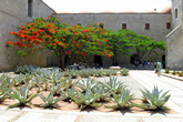 Кактусы у доминиканского собора