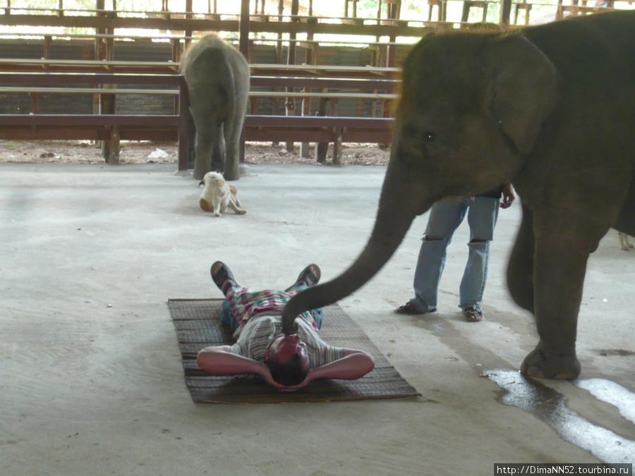 Шоу. Поцелуй слона.