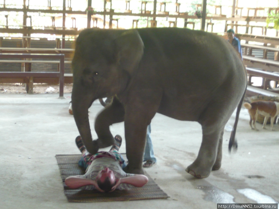 Слоновий массаж