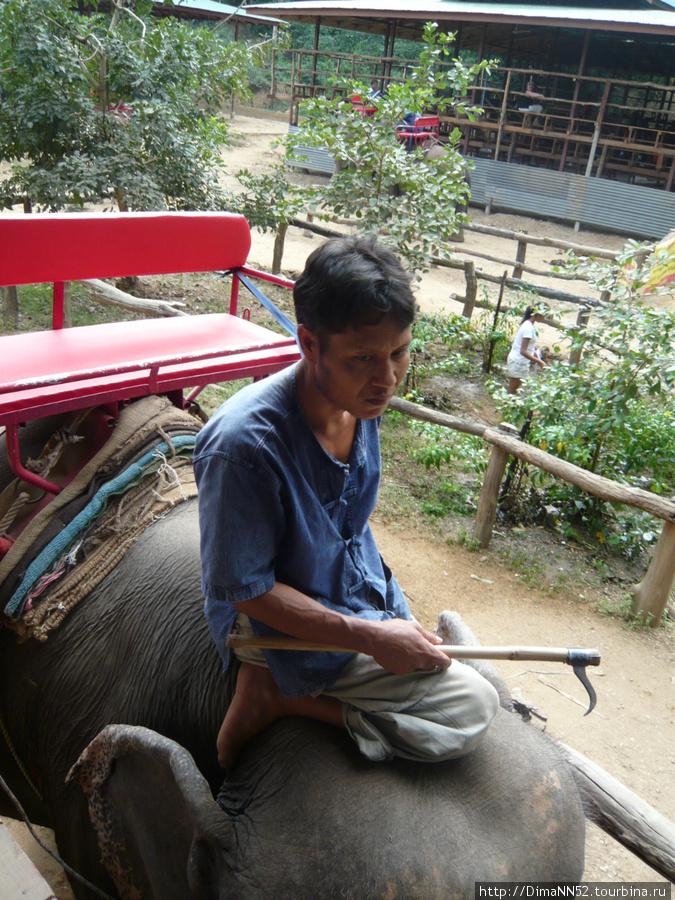 Погонщик слона. Все тайцы научились петь песню: