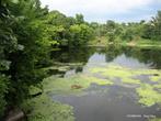 Иногда сине-зеленые водоросли меняют цвет ее воды, делая Рось мутной и грязной... Прозрачность в таких местах резко падает и не превышает 20-30 см.