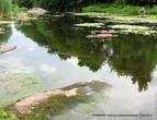 Длина  Роси —  346 км, ширина в среднем течении около 50 м.