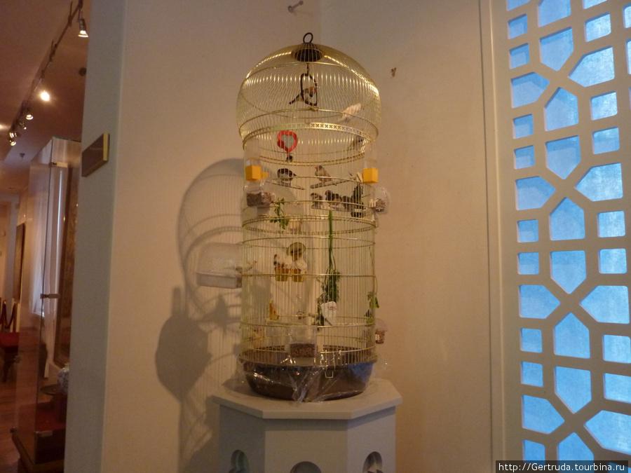 При входе на второй этаж выставки удивила клетка с маленькими красивыми птичками-амадинами.