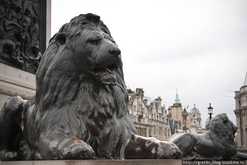 Львы под колонной Адмирала Нельсона. Раньше тут стояли пушки, но их заменили на этих львов. Они реально огромные!