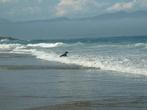 Собака смешно прыгала в волнах — как человек