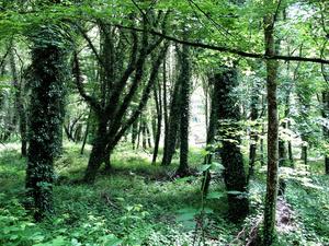 И опять леса.