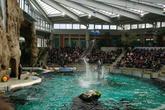 В дельфинарии, супер прыжок
