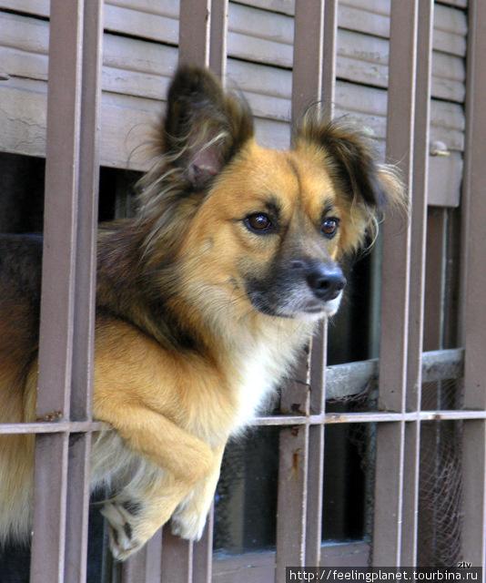 В Буэнос-Айресе очень много собак. Иногда кажется, что их больше, чем людей