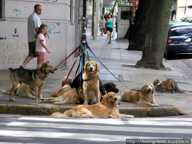 Часто собаки гуляют компа