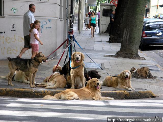 Часто собаки гуляют компаниями
