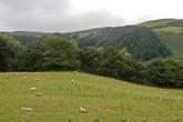 наверное это рай для овец.