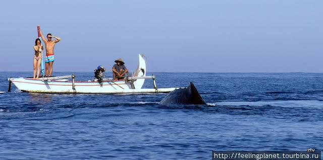 Чудо-юдо рыба-кит!