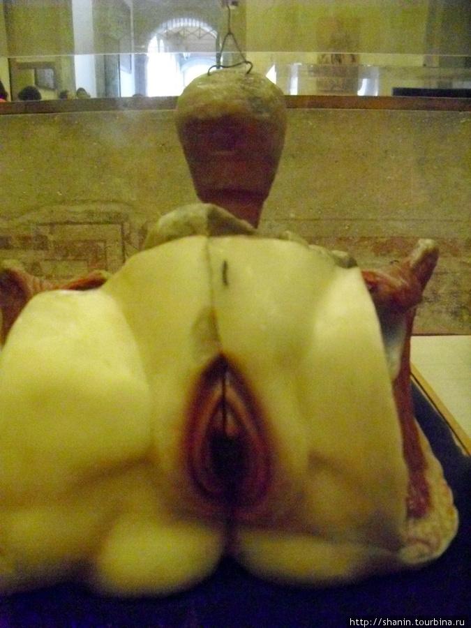 массаж вульвы эротический