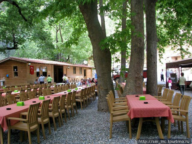 Обед под кронами деревьев