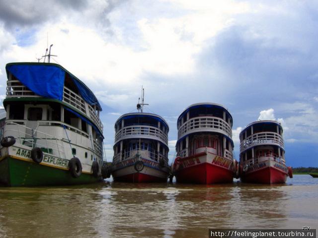 Амазонские автобусы. В дж