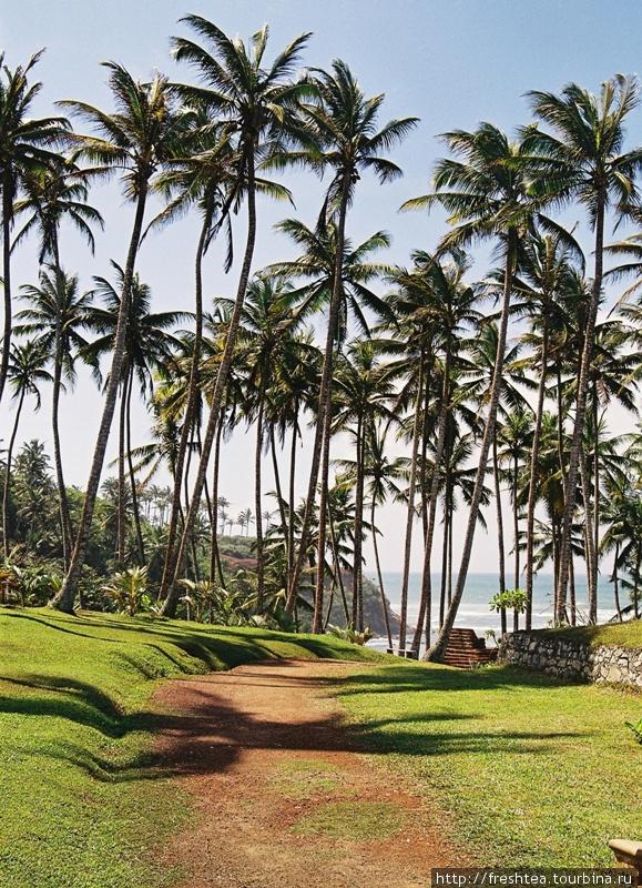К океану с высокого берега в отеле Barberyn Beach проложили живописные аллеи. По пути на пляж и ногам разминка, и глазу удовольствие. Шри-Ланка