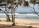 Мангры не просто шагают по песку, выбрасывая длинные корни-опоры, но и дают тень в жару, и укрепляют берег.