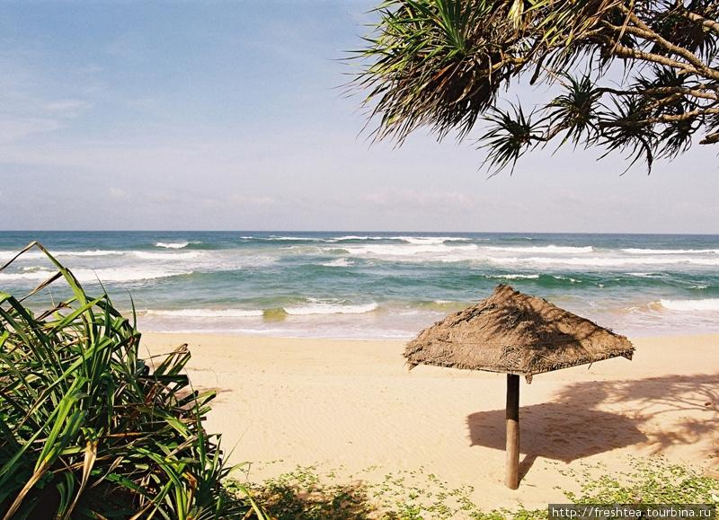 Грибки-зонтики нечасто встретишь на пляжах Шри-Ланки, в отличие от европейских курортов: для защиты от тропического солнца зону отдыха устраивают под пологом пальм на территории отелей. Шри-Ланка