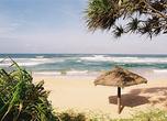 Грибки-зонтики нечасто встретишь на пляжах Шри-Ланки, в отличие от европейских курортов: для защиты от тропического солнца зону отдыха устраивают под пологом пальм на территории отелей.