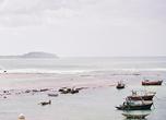 Бухта в Велигаме — мелководная, прикрытая от волн рифами (что нечасто случается на Шри-Ланке), вот рыбаки и облюбовали это место как стоянку для своих лодок и катеров.