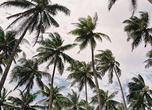 В кадр длиннющие прибрежные пальмы целиком не забрать: вот и прижодится снимать по частям. Верхние этажи эффектно выглядят на фоне кучевых облаков, что на южной оконечности острова — частые гости.