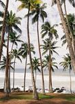 Такие пальмовые рощи покрывают спуски к океану вокруг Велигамы.