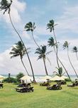 Такие длинноногие пальмы от солнца не спасут, разве что веером-вентилятором могут служить. Вот и приходится забираться в спасительную тень под парусиной солнечных зонтов.