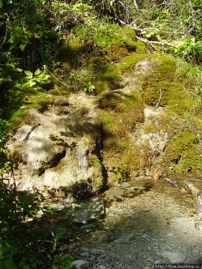 Сентябрь-2009. Поездка на Пшадские водопады. Вода, камни и мох