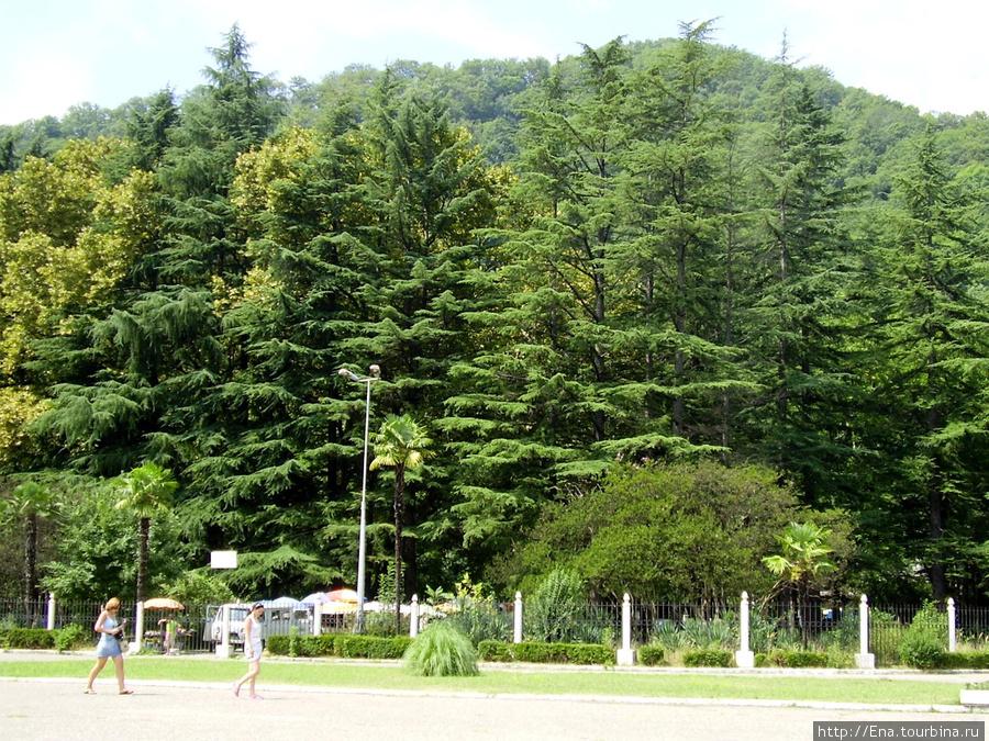 Июль 2006. Экскурсия в Сочи. Мацеста. Среди красивой природы приятно поправлять свое здоровье