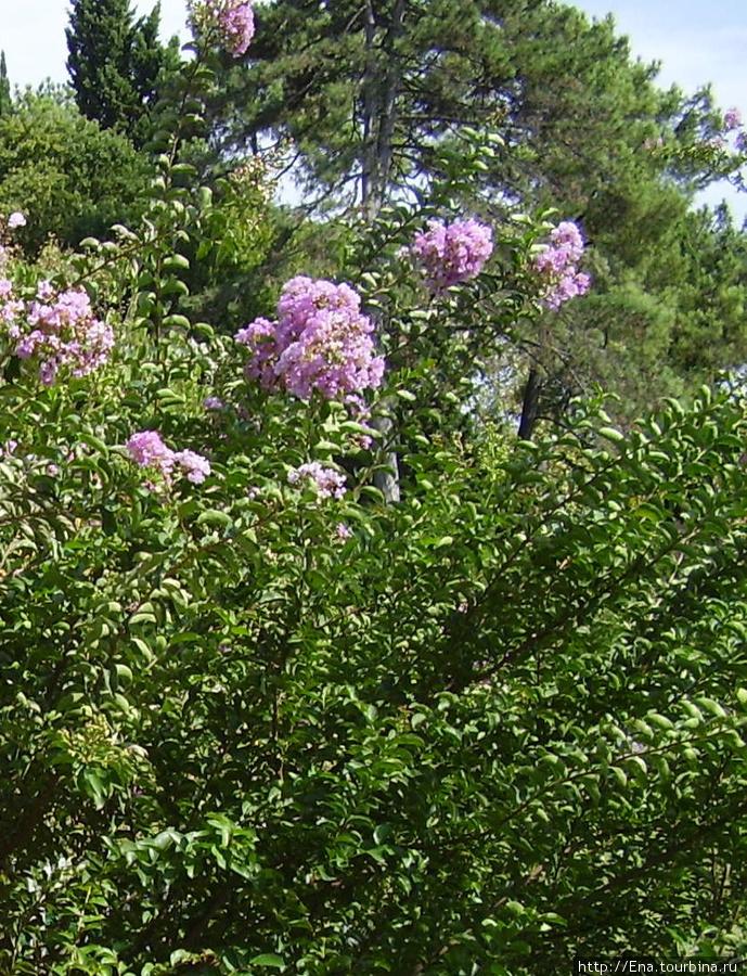 Июль 2006. Экскурсия в Сочи. Зеленый парк Ривьера