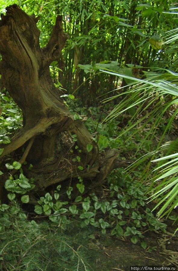 Июль 2006. Экскурсия в Сочи. Разнообразные растения в уголке фитофантазии